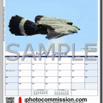photocommission-calendar-2012-portrait-page03F-480px