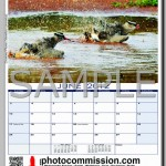 photocommission-calendar-2012-portrait-page03R-480px