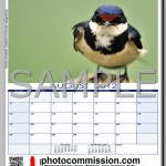 photocommission-calendar-2012-portrait-page04R-480px