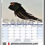 photocommission-calendar-2012-portrait-page06F-480px