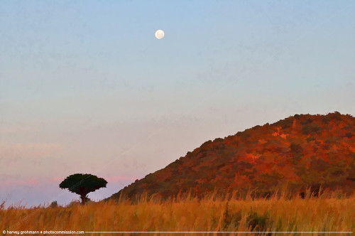 Pilanesberg Solitary Hill, Tree and Moon